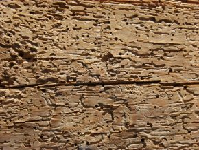 Wood Decay in Buildings: Causes and Cures